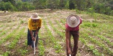 Productores de poroto se reunieron en Santa Fe y Chitra en Veraguas