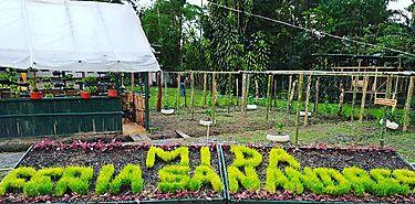 Feria de San Andrés será la sede de la celebración del día internacional de las frutas 2018