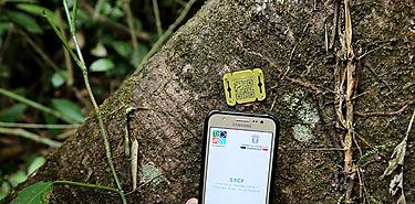Panamá trabaja para eliminar la tala ilegal de árboles en el 2020