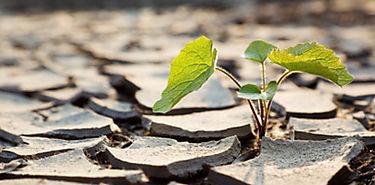 La teledetección como aliada en la lucha contra la sequía