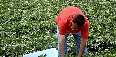 Becas para cursos de Agricultura en Egipto
