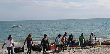 Latinoamérica genera 11 por ciento de producción pesquera mundial