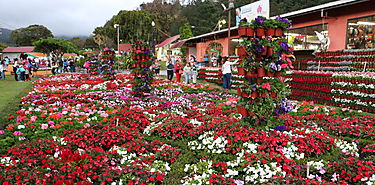 Feria de las Flores y del Café impactó economía de la región y aumentó el número de visitantes