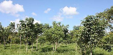 MOP realiza trabajos de mitigación a través de programas de reforestación de zonas
