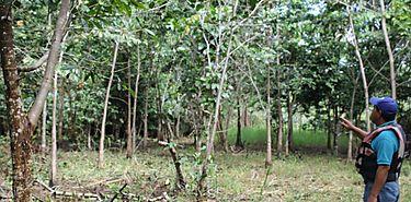 UTP Bocas del Toro participa de traspaso de tierras reforestadas