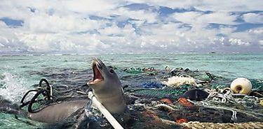 La pesca fantasma ronda océanos mundiales