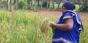 FAO apoya proyectos para adaptación resilientes al cambio climático