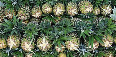 Productores de frutas se beneficiarán con nueva normativa de Ley 25
