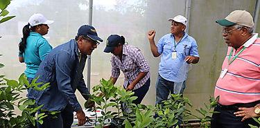 MIDA realiza muestreo en Vivero Semillas y Plantones de Tambo Coclé