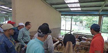 Productores de Coclé participan de Día de Campo sobre Programa Ovinocaprino