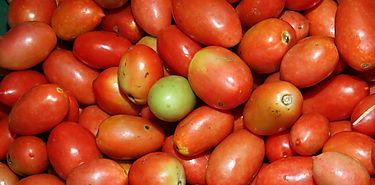 El tomate mejora su sabor y su valor funcional con menos agua de riego