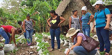 Majagual cultiva hortalizas y recibe semillas de ñame mejorado