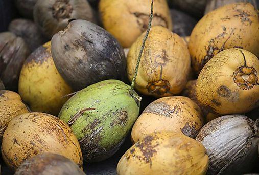 Feria del Coco en Colón
