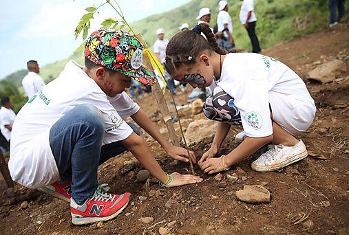 Panamá se mueve en el Día Nacional de Reforestación