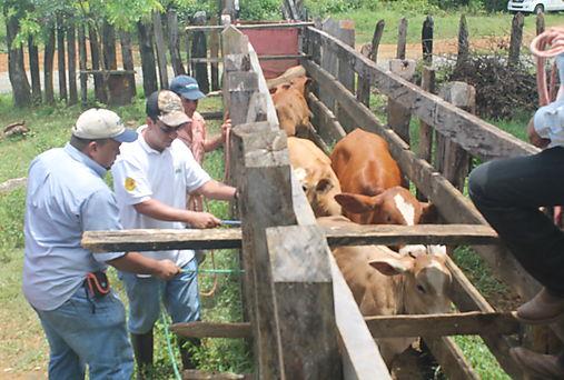 MIDA realiza capacitación a veterinarios del MINSA y ganaderos sobre Trazabilidad Bovina