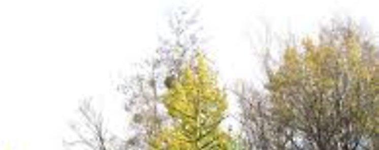 Autoridad de Aseo instala centros de acopio para recoger arbolitos de Navidad