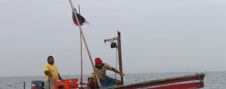 Buscan optimizar el sector pesquero en Panamá