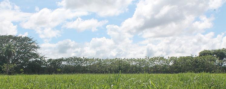 La gestión de las siegas de pasto determina la diversidad y calidad de la vegetación