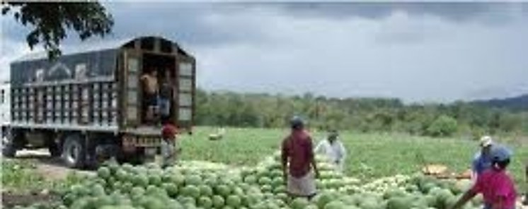 Envían hacia Holanda el primer contenedor de sandía bajo el sello Panamá Exporta