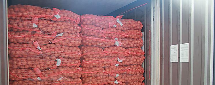 Nueva reglamentación sobre calidad de la cebolla