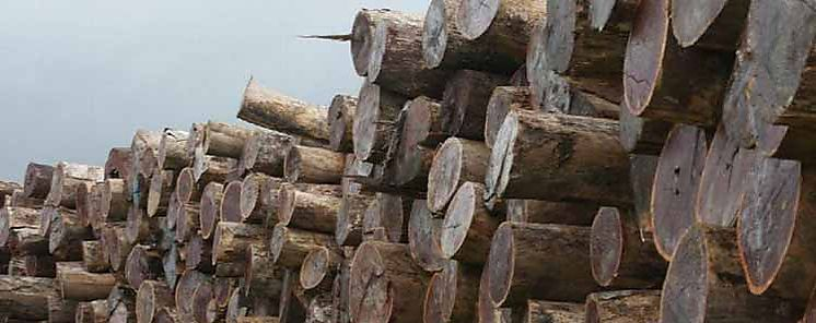 MiAMBIENTE mantiene su pie de fuerza en Operativo Forestal