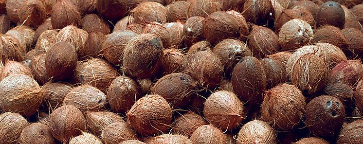 Primera Feria del Coco en Colón