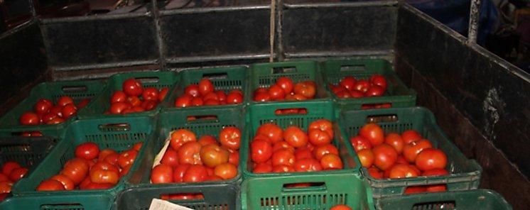 Un compuesto de tomate protege las plantas de las bacterias