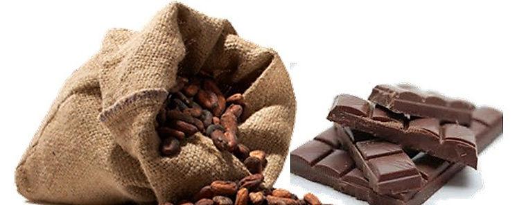 Cacao y chocolate resultan provechosos para la cognición