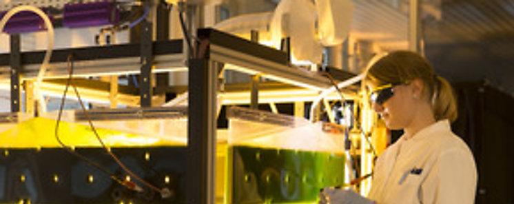 Bioeconomía para un futuro sostenible