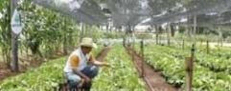 Ministros de Agricultura de BRICS destacan importancia de cooperación y seguridad alimentaria