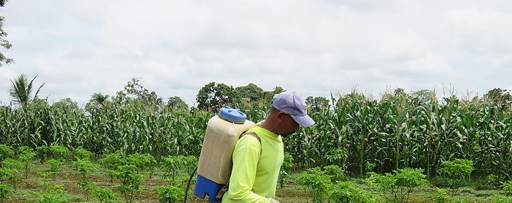 Cooperativa Alanjeña promueve programa de insumos agropecuarios