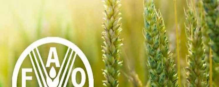 Retroceden precios mundiales de los alimentos en agosto según la FAO