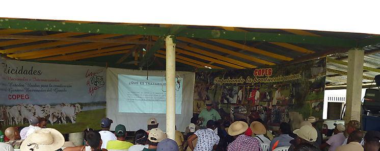 Productores de Garachiné en Darién participan en charlas de Salud Animal