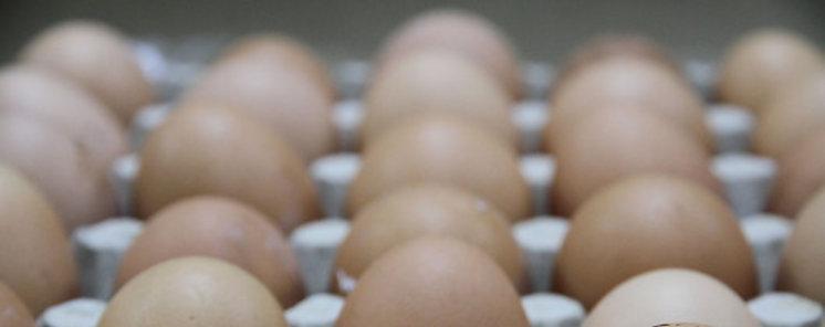 Así es la huella ambiental de la industria del huevo