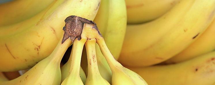 El hongo que amenaza con dejar a las bananas en peligro de extinción