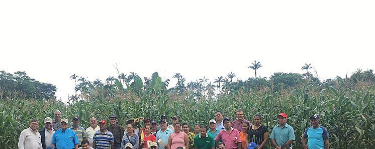 MIDA promueve en Chiriquí cultivo de granos en pequeñas parcelas