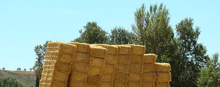 Paja de trigo para sustituir los plásticos de las baterías de litio