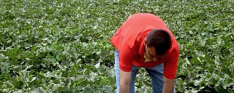 Migración a capital panameña impacta en el sector agrícola