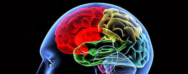 La ecología ha determinado el gran desarrollo del cerebro humano