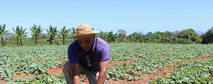 Próxima Jornada Agropecuaria en Divalá
