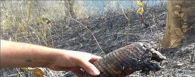 Animales silvestres los más perjudicados en los incendios