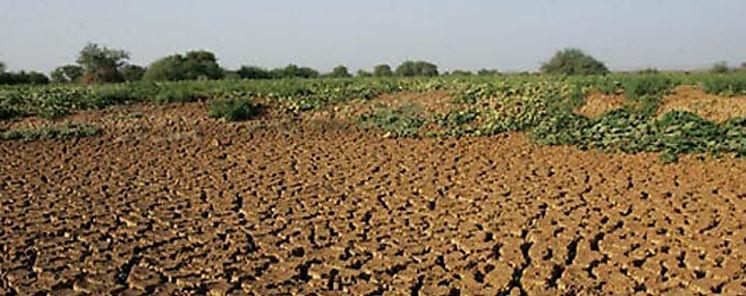 Degradación impacta en suelos cultivables de Centroamérica