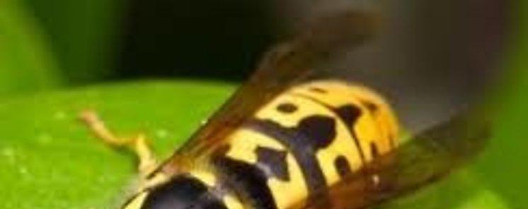 Estudio vaticina aumento de las especies invasoras en el mundo