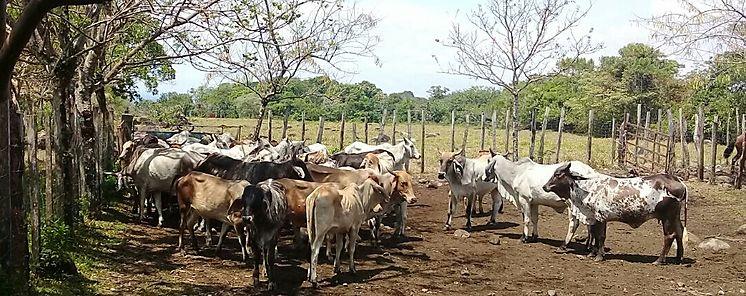 MIDA en Chiriquí continúa operativo a nivel de frontera