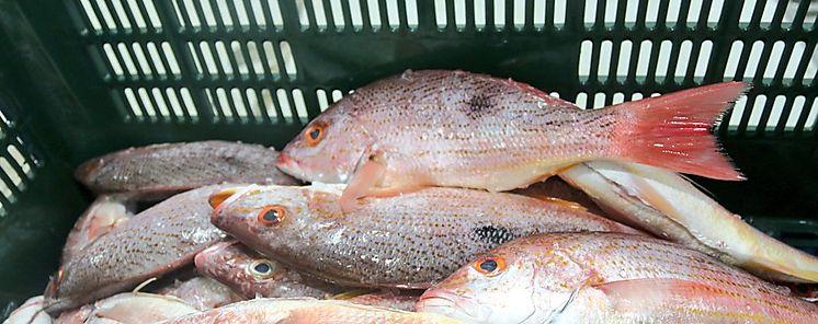 Pescado de Chitré para EUA Francia y Vietnam bajo el sello Panamá Exporta
