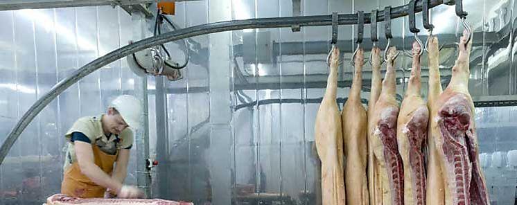 Abogan en Italia por video vigilancia en mataderos de animales