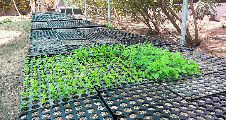 Tecnolog a raipot nuevo sistema de siembra en viveros e for Viveros en penalolen