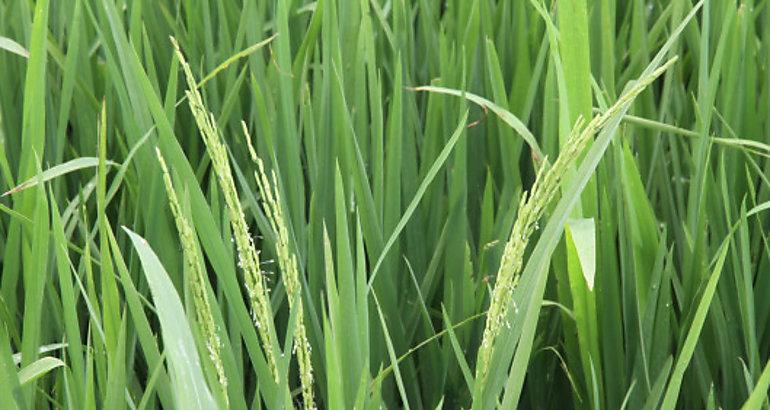 Miami acogerá el III Congreso Mundial sobre Bioestimulantes Agrícolas